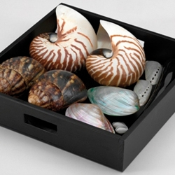 Spa Shells Massage Ritual Set